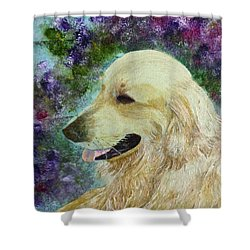 Shower Curtain featuring the painting Beautiful Golden by Claire Bull