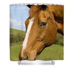 Beautiful Horse Portrait Shower Curtain by Meirion Matthias