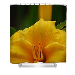 Shower Curtain featuring the photograph Beautiful In Yellow by Ramona Whiteaker