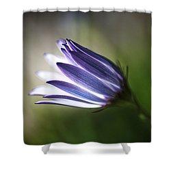 Beautiful Inner Glow Of The Daisy Shower Curtain
