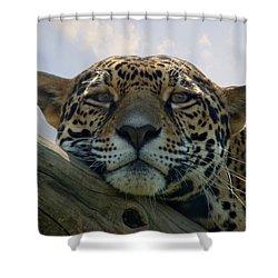 Beautiful Jaguar Shower Curtain by Sandy Keeton