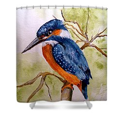 Beautiful Kingfisher Shower Curtain