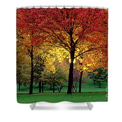 Beautiful Light At The Park In St. Louis In Autumn Shower Curtain by Wernher Krutein