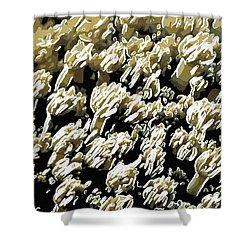 Beautiful Marine Plants 4 Shower Curtain by Lanjee Chee