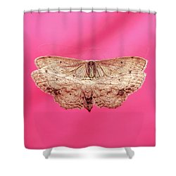 Beautiful Moth Wings Reflection Shower Curtain