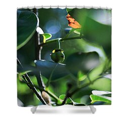 Beautiful Nature Shower Curtain by Christopher L Thomley