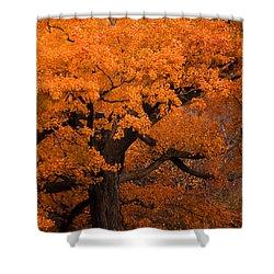 Beautiful Orange Tree On A Fall Day Shower Curtain by Joni Eskridge