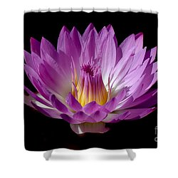 Beautiful Pink Pearl Lily Shower Curtain