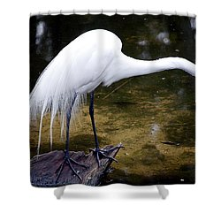 Beautiful Plumage Shower Curtain by Kenneth Albin