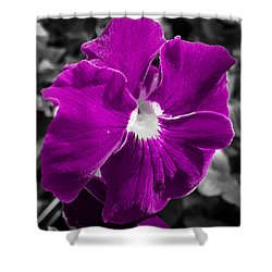 Beautiful Purple Shower Curtain