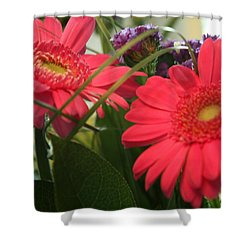 Shower Curtain featuring the photograph Beautiful Red Daisies by Karen Nicholson