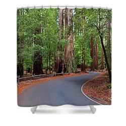 Beautiful Redwood Grove Shower Curtain