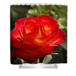 Shower Curtain featuring the photograph Beautiful Rose by Frank Stallone