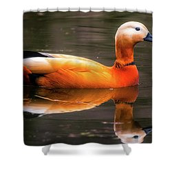 Shower Curtain featuring the photograph Beautiful Rust Goose by The 3 Cats