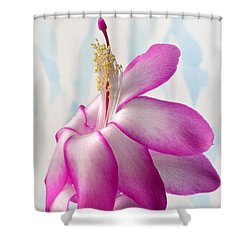 Beautiful Schlumbergera. Shower Curtain by Terence Davis