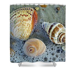 Beautiful Shells In The Surf Shower Curtain by D Hackett