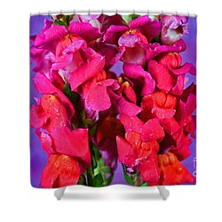 Beautiful Snapdragon Flowers Shower Curtain
