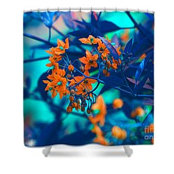 Shower Curtain featuring the photograph Beautiful Solanum Septemiobum Flowers  by Lance Sheridan-Peel