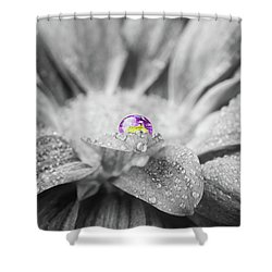 Beautiful Splash Of Purple On A Daisy In The Garden Shower Curtain
