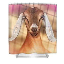 Beautiful Taffy Shower Curtain