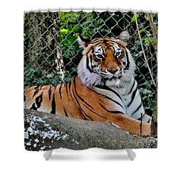 Beautiful Tiger Shower Curtain