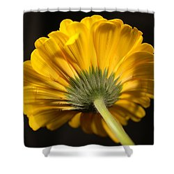 Shower Curtain featuring the photograph Beautiful Underside by Jeff Swan