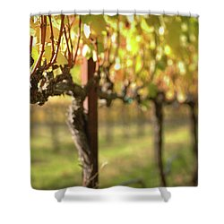 Beautiful Vineyard In Napa Valley Shower Curtain