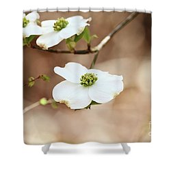 Shower Curtain featuring the photograph Beautiful White Flowering Dogwood Blossoms by Stephanie Frey