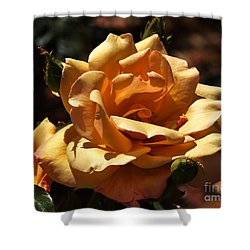Beautiful Yellow Rose Belle Epoque Shower Curtain by Louise Heusinkveld