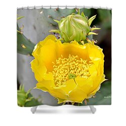 Beauty Begets Beauty Shower Curtain