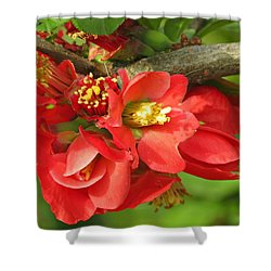 Beauty In The Branche Shower Curtain