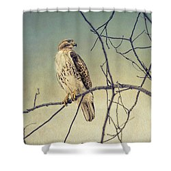 Red-tailed Hawk On Watch Shower Curtain