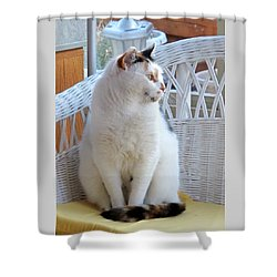 Shower Curtain featuring the photograph Beauty In White by Phyllis Kaltenbach