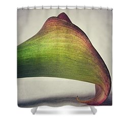 Shower Curtain featuring the photograph Beauty by Karen Stahlros