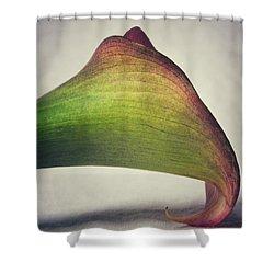Beauty Shower Curtain by Karen Stahlros