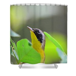 Shower Curtain featuring the photograph Beauty by Kathy Gibbons