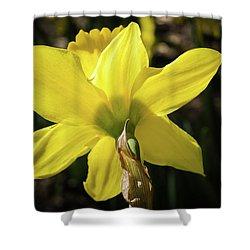 Beauty Of Springtime Shower Curtain