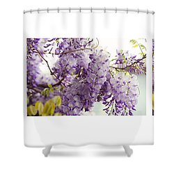 Beauty Of Wisteria. White. Triptych Shower Curtain