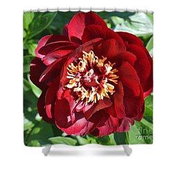 Beauty Peony Bloom Shower Curtain by Marsha Heiken