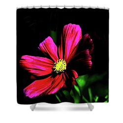 Shower Curtain featuring the photograph Beauty  by Tom Prendergast