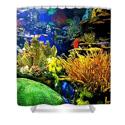 Shower Curtain featuring the photograph Beauty Under The Sea by Kelly Mills