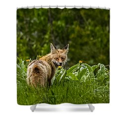 Shower Curtain featuring the photograph Beaver Creek Mama Fox In Spring by Yeates Photography