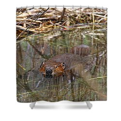 Beaver Look Shower Curtain