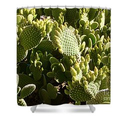 Beaver Tail Cactus, Cave Creek, Arizona Shower Curtain