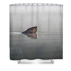 Beaver Tail Shower Curtain