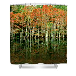 Beaver's Bend Cypress All In A Row Shower Curtain by Tamyra Ayles