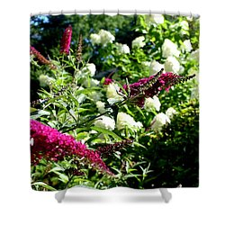 Shower Curtain featuring the photograph Beckoning Butterfly Bush by Hanne Lore Koehler
