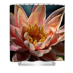 Beckoning The Sun Water Lily Shower Curtain