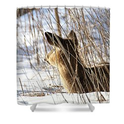 Bedded Fawn 2 Shower Curtain by Brook Burling