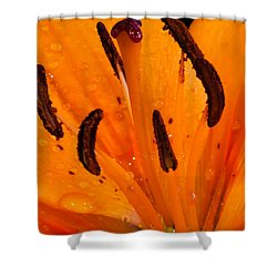 Bedraggled Beauty In Orange Shower Curtain